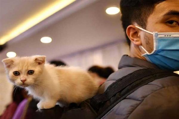 ارتباط با حیوانات خانگی را محدود کنید