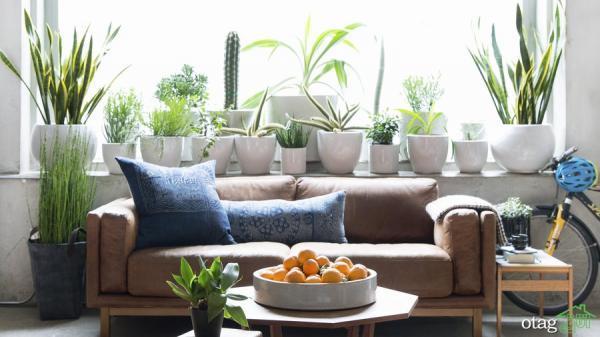 ایده هایی برای گل آرایی آپارتمان در جهت زیباسازی دکوراسیون داخلی
