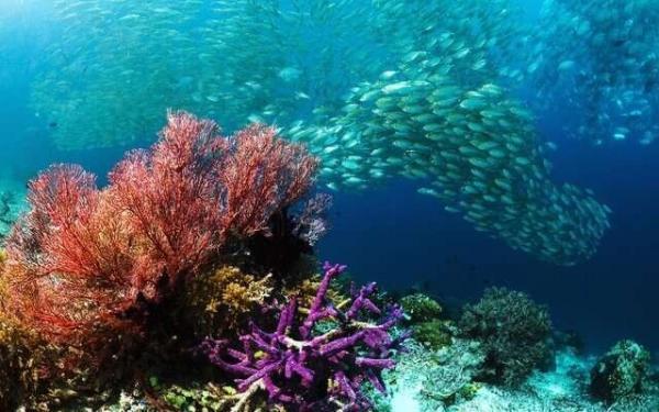 اثرات مخرب تغییر اقلیم بر دریاها و اقیانوس ها