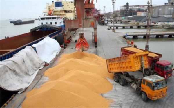 تأمین عمده احتیاج گندم وارداتی کشور به وسیله حمل و نقل دریایی